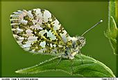 All insects-Photos - Digital-Nature-Photography - Photo