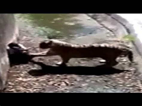Man killed by white tiger blamed; he was mentally ill