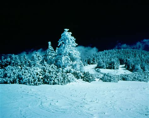 Snow Covered Trees At Night Background Image, Wallpaper or