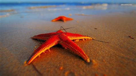 What Can We Learn from a Starfish? -A Unique Way of Self